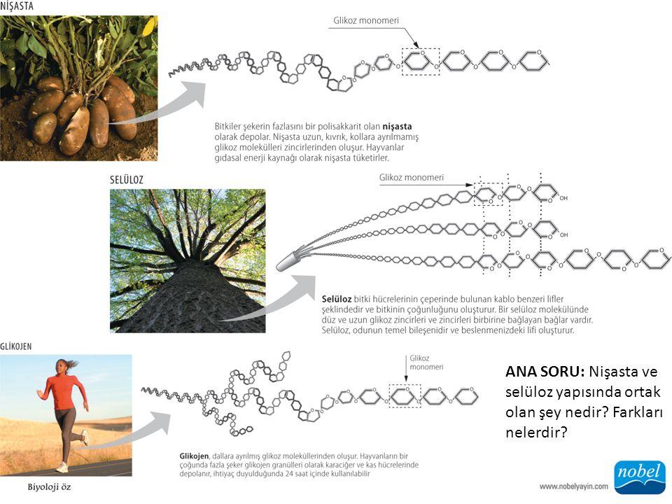 ANA SORU: Nişasta ve selüloz yapısında ortak olan şey nedir? Farkları nelerdir?