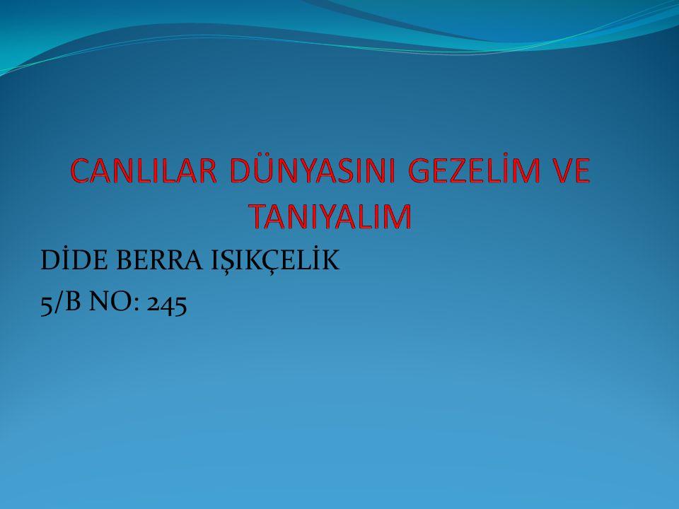 DİDE BERRA IŞIKÇELİK 5/B NO: 245