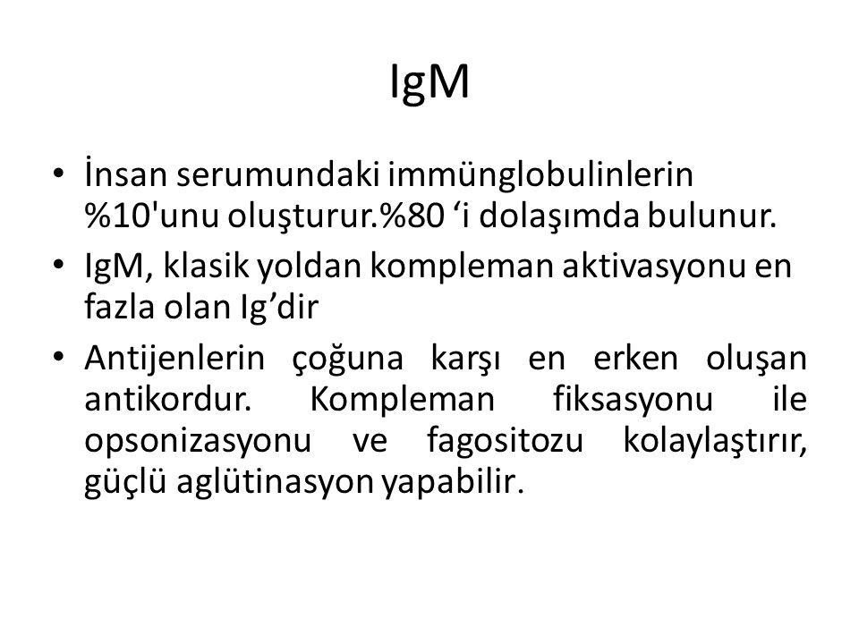 IgM İnsan serumundaki immünglobulinlerin %10'unu oluşturur.%80 'i dolaşımda bulunur. IgM, klasik yoldan kompleman aktivasyonu en fazla olan Ig'dir Ant