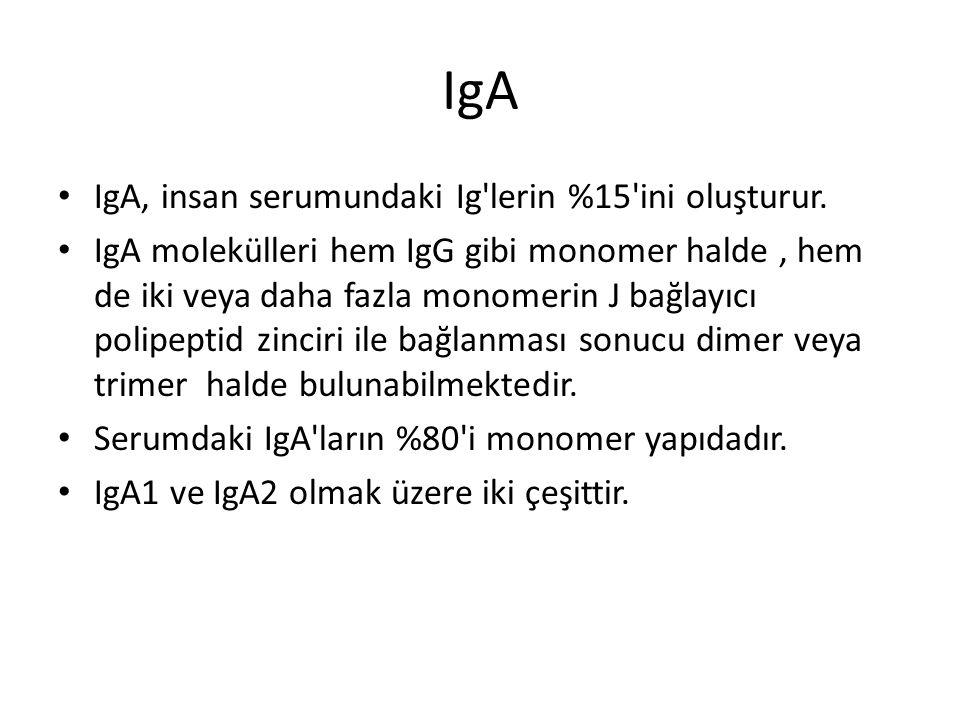 IgA IgA, insan serumundaki Ig'lerin %15'ini oluşturur. IgA molekülleri hem IgG gibi monomer halde, hem de iki veya daha fazla monomerin J bağlayıcı po