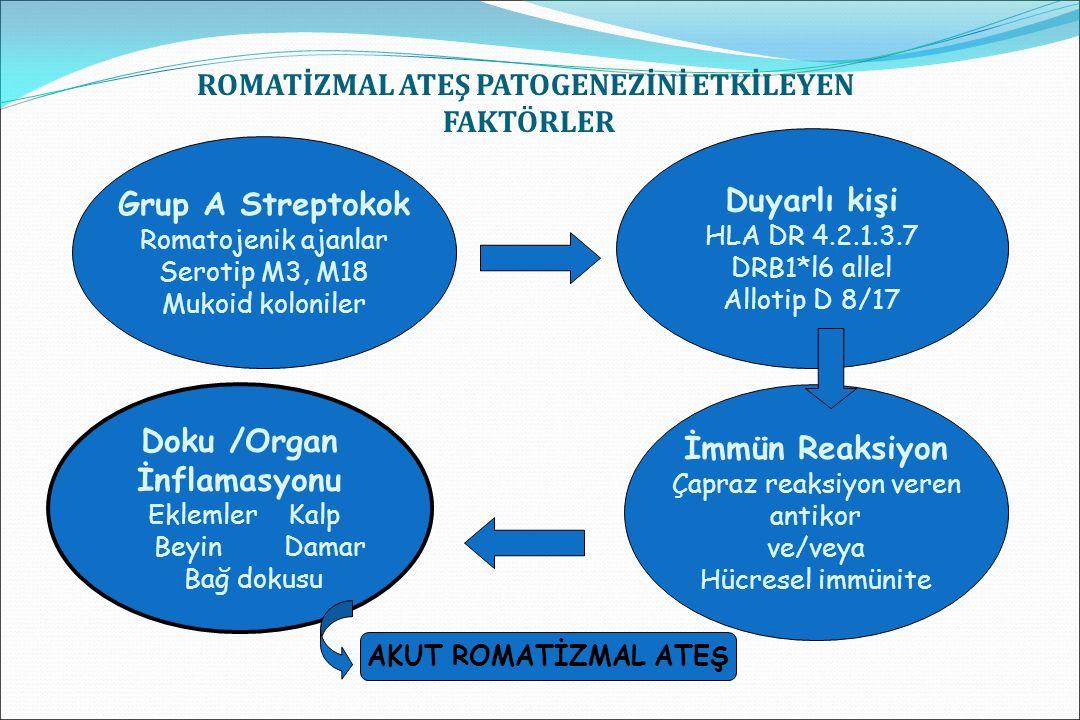 DOKU HASARI A grubu beta hemolitik streptokok enfeksiyonu ve doku hasarı gelişimi arasında latent bir dönemin olması olayın immünolojik mekanizma ile geliştiğini desteklemektedir.