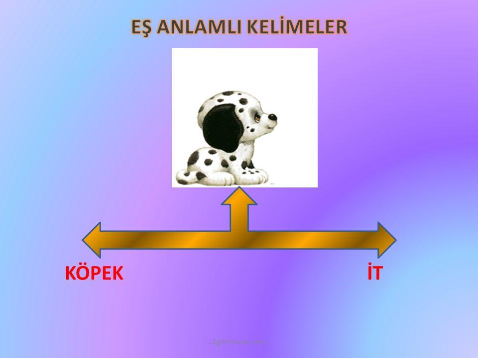 İTKÖPEK …Egitimhane.com…