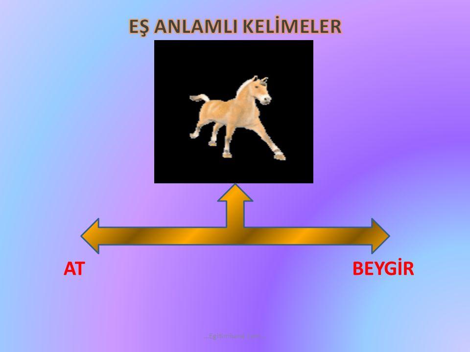 PÜSÜ KEDİ …Egitimhane.com…