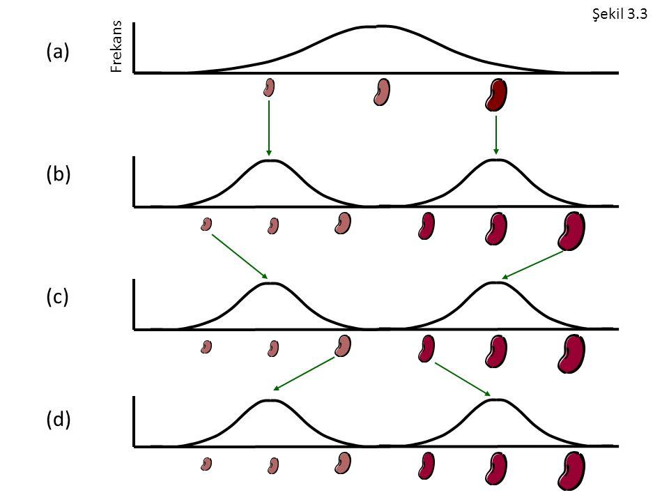 Frekans (a) (b) (c) (d) Şekil 3.3