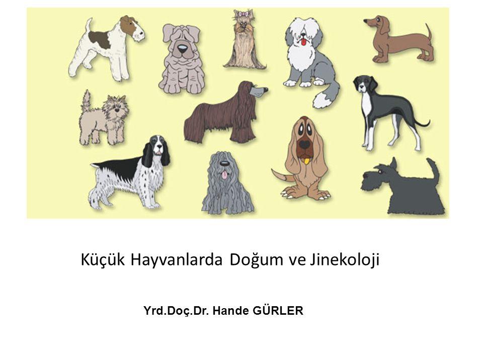 Yrd.Doç.Dr. Hande GÜRLER Küçük Hayvanlarda Doğum ve Jinekoloji