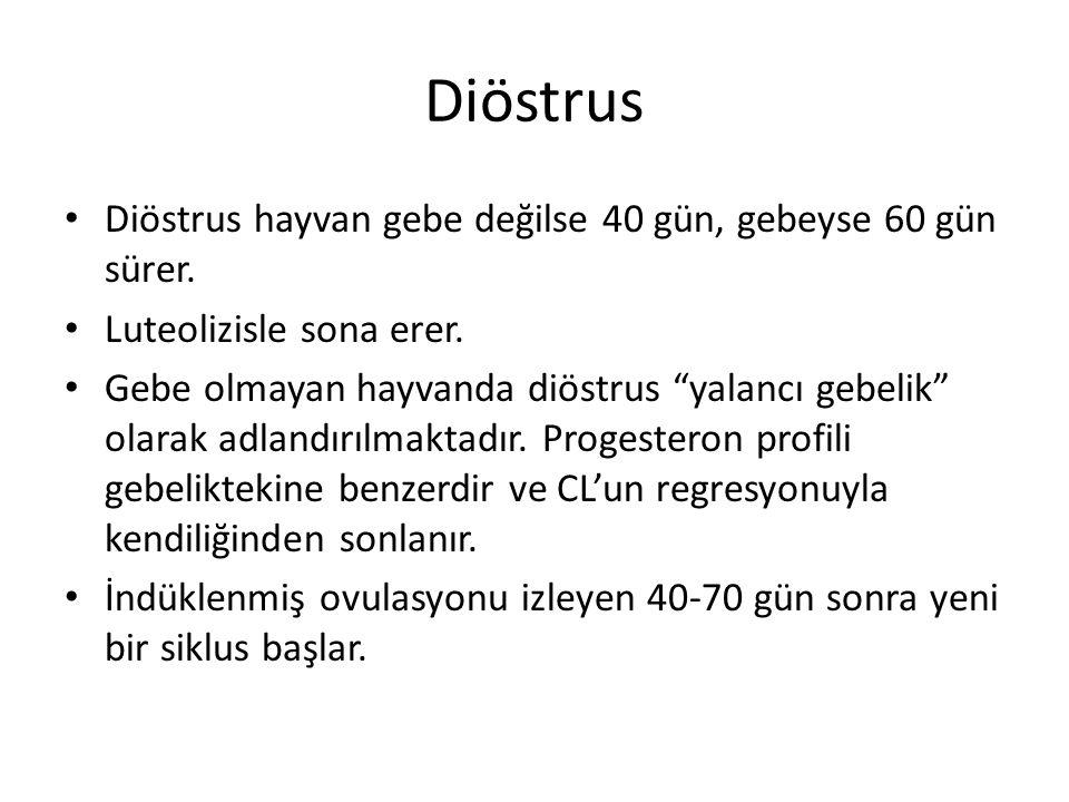 """Diöstrus Diöstrus hayvan gebe değilse 40 gün, gebeyse 60 gün sürer. Luteolizisle sona erer. Gebe olmayan hayvanda diöstrus """"yalancı gebelik"""" olarak ad"""