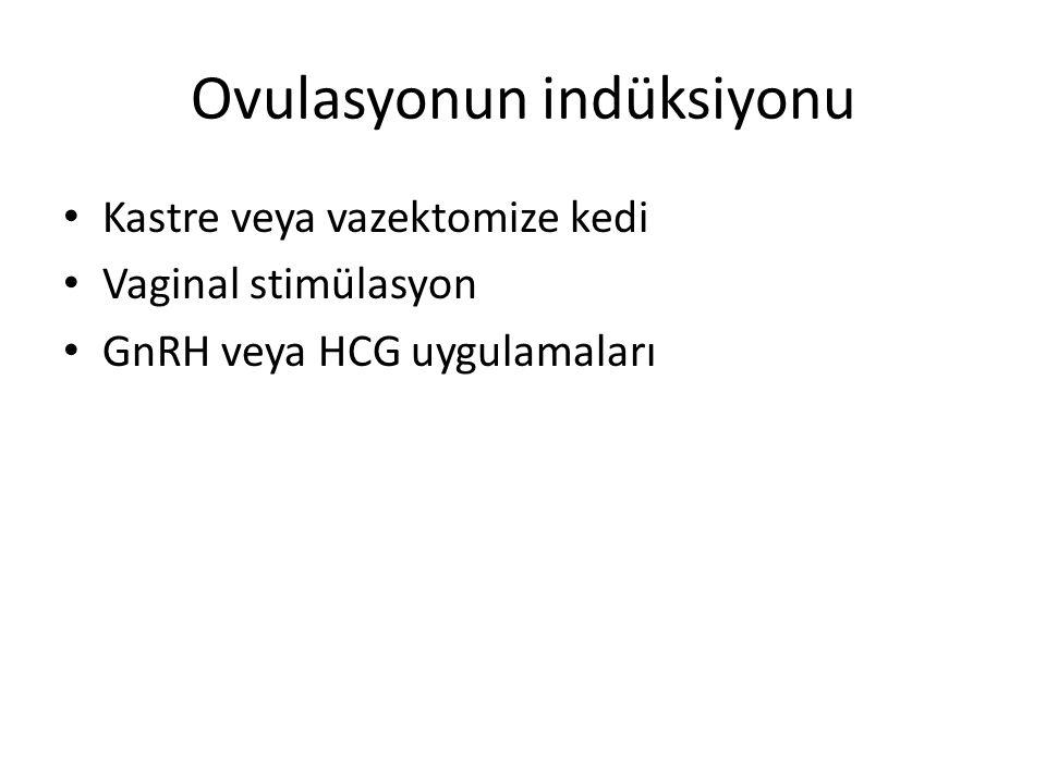 Ovulasyonun indüksiyonu Kastre veya vazektomize kedi Vaginal stimülasyon GnRH veya HCG uygulamaları