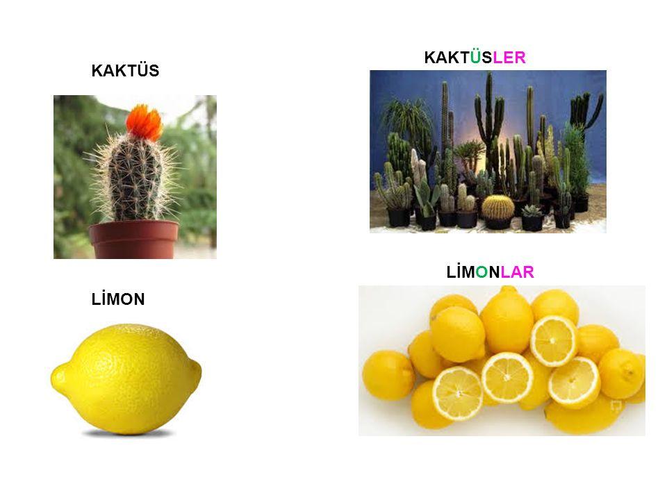 KAKTÜS KAKTÜSLER LİMON LİMONLAR