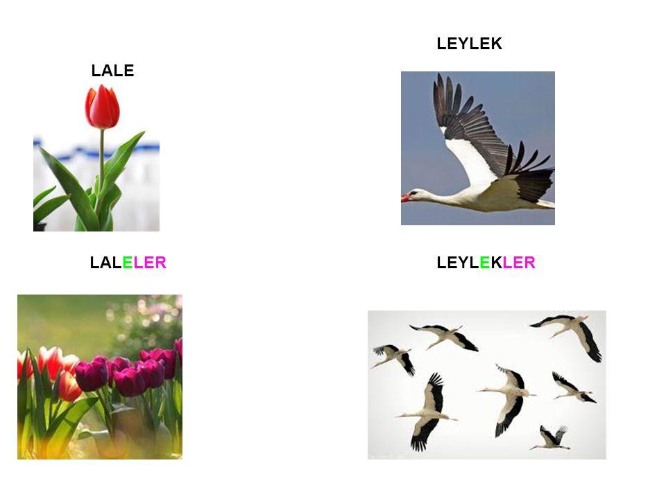 LALE LALELER LEYLEK LEYLEKLER