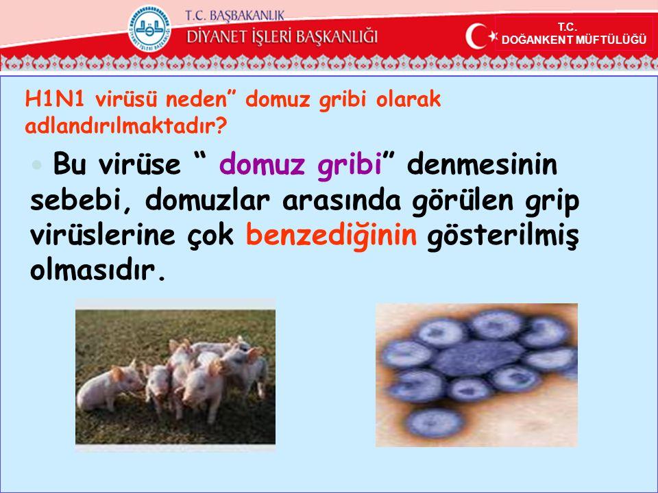 T.C.DOĞANKENT MÜFTÜLÜĞÜ H1N1 virüsü neden domuz gribi olarak adlandırılmaktadır.