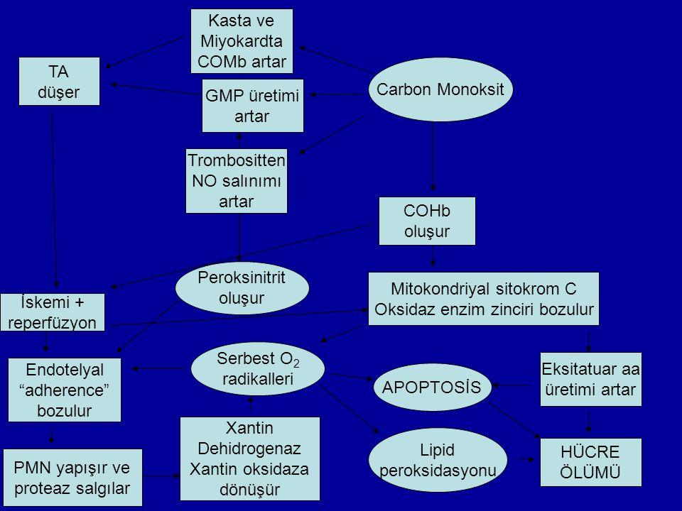Carbon Monoksit GMP üretimi artar Kasta ve Miyokardta COMb artar Trombositten NO salınımı artar COHb oluşur Mitokondriyal sitokrom C Oksidaz enzim zinciri bozulur TA düşer İskemi + reperfüzyon Endotelyal adherence bozulur PMN yapışır ve proteaz salgılar Peroksinitrit oluşur Serbest O 2 radikalleri APOPTOSİS Eksitatuar aa üretimi artar HÜCRE ÖLÜMÜ Lipid peroksidasyonu Xantin Dehidrogenaz Xantin oksidaza dönüşür