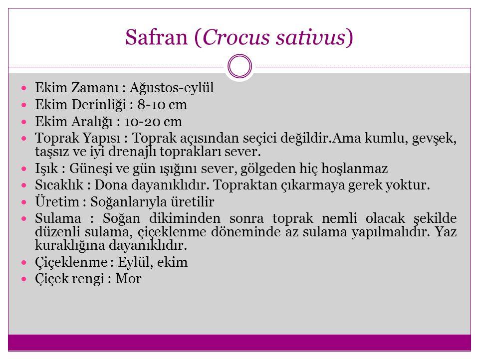 Safran (Crocus sativus) Ekim Zamanı : Ağustos-eylül Ekim Derinliği : 8-10 cm Ekim Aralığı : 10-20 cm Toprak Yapısı : Toprak açısından seçici değildir.