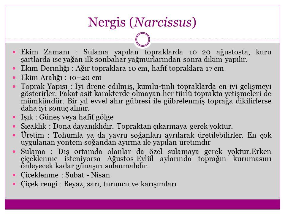 Nergis (Narcissus) Ekim Zamanı : Sulama yapılan topraklarda 10–20 ağustosta, kuru şartlarda ise yağan ilk sonbahar yağmurlarından sonra dikim yapılır.
