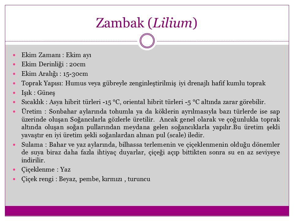Zambak (Lilium) Ekim Zamanı : Ekim ayı Ekim Derinliği : 20cm Ekim Aralığı : 15-30cm Toprak Yapısı: Humus veya gübreyle zenginleştirilmiş iyi drenajlı