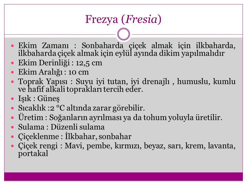Frezya (Fresia) Ekim Zamanı : Sonbaharda çiçek almak için ilkbaharda, ilkbaharda çiçek almak için eylül ayında dikim yapılmalıdır Ekim Derinliği : 12,
