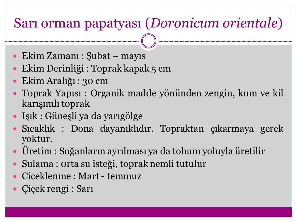 Sarı orman papatyası (Doronicum orientale) Ekim Zamanı : Şubat – mayıs Ekim Derinliği : Toprak kapak 5 cm Ekim Aralığı : 30 cm Toprak Yapısı : Organik
