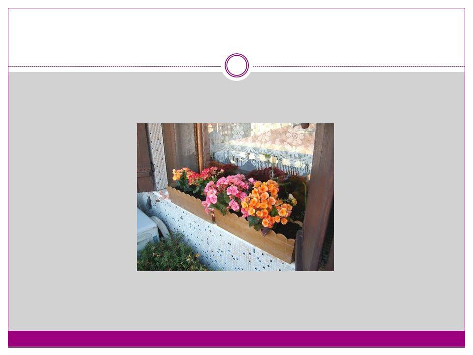 Süsen Çiçeği (Iris versicolor) Ekim Zamanı : ilkbahar ve sonbahar Ekim Derinliği : Toprak kapak 2.5 cm Ekim Aralığı : 20 -25 cm Toprak Yapısı : Organik madde yönünden, hafif ve süzek Işık : Güneş Sıcaklık : Dona dayanıklıdır.