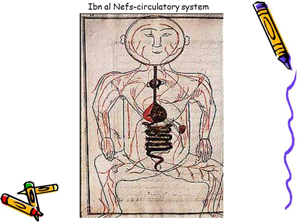 Ibn al Nefs-circulatory system