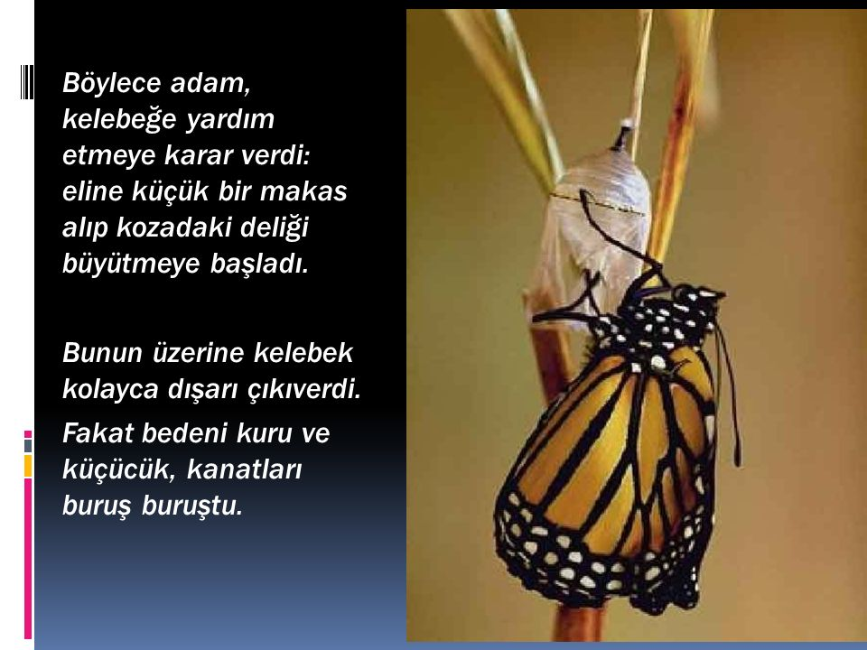 Böylece adam, kelebeğe yardım etmeye karar verdi: eline küçük bir makas alıp kozadaki deliği büyütmeye başladı. Bunun üzerine kelebek kolayca dışarı ç
