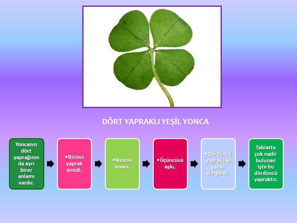 DÖRT YAPRAKLI YEŞİL YONCA Yoncanın dört yaprağının da ayrı birer anlamı vardır.