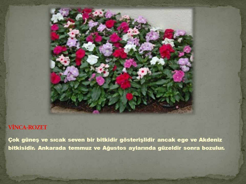 Çok güneş ve sıcak seven bir bitkidir gösterişlidir ancak ege ve Akdeniz bitkisidir.