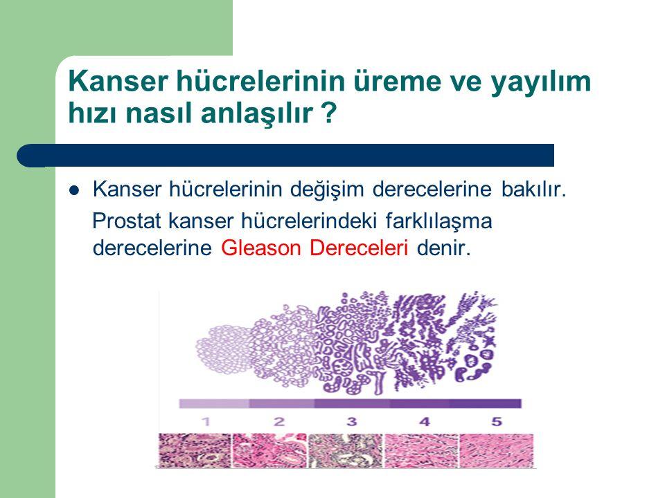 Kanser hücrelerinin üreme ve yayılım hızı nasıl anlaşılır .