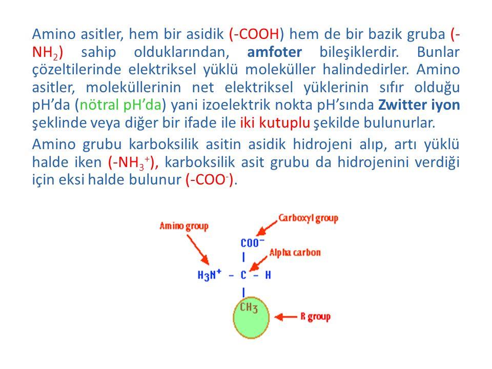 Amino asitler, hem bir asidik (-COOH) hem de bir bazik gruba (- NH 2 ) sahip olduklarından, amfoter bileşiklerdir. Bunlar çözeltilerinde elektriksel y