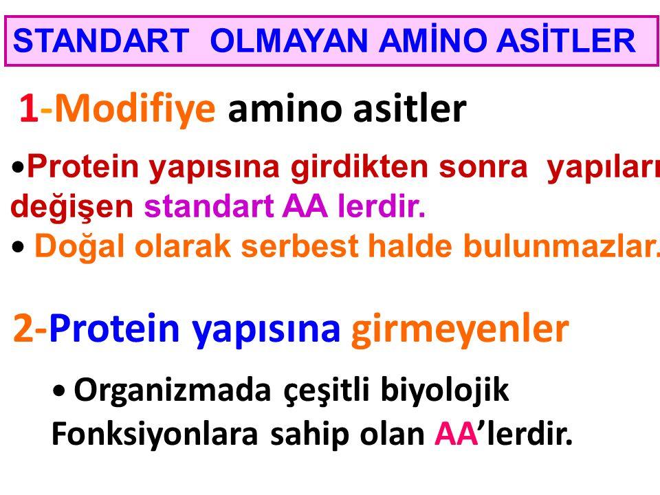 1-Modifiye amino asitler 2-Protein yapısına girmeyenler STANDART OLMAYAN AMİNO ASİTLER Protein yapısına girdikten sonra yapıları değişen standart AA l