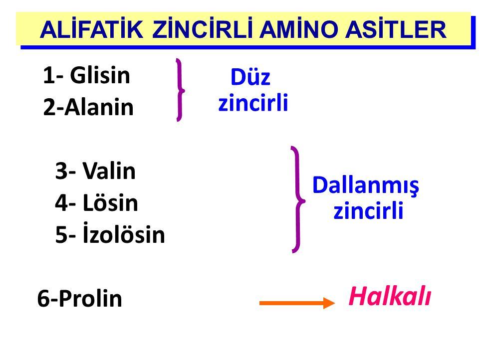 ALİFATİK ZİNCİRLİ AMİNO ASİTLER Dallanmış zincirli Halkalı 1- Glisin 2-Alanin 3- Valin 4- Lösin 5- İzolösin 6-Prolin Düz zincirli