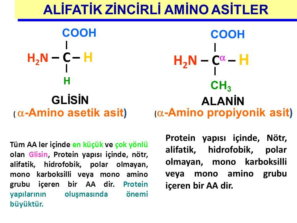 GLİSİN (  -Amino asetik asit ) H 2 N – C – H COOH H ALİFATİK ZİNCİRLİ AMİNO ASİTLER COOH H 2 N – C  – H CH 3 ALANİN (  -Amino propiyonik asit ) Tüm