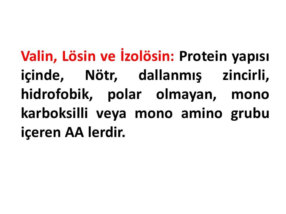 Valin, Lösin ve İzolösin: Protein yapısı içinde, Nötr, dallanmış zincirli, hidrofobik, polar olmayan, mono karboksilli veya mono amino grubu içeren AA