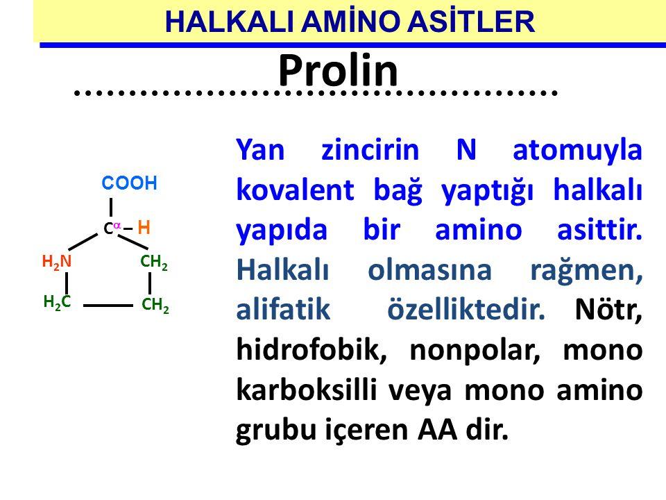 Yan zincirin N atomuyla kovalent bağ yaptığı halkalı yapıda bir amino asittir. Halkalı olmasına rağmen, alifatik özelliktedir. Nötr, hidrofobik, nonpo