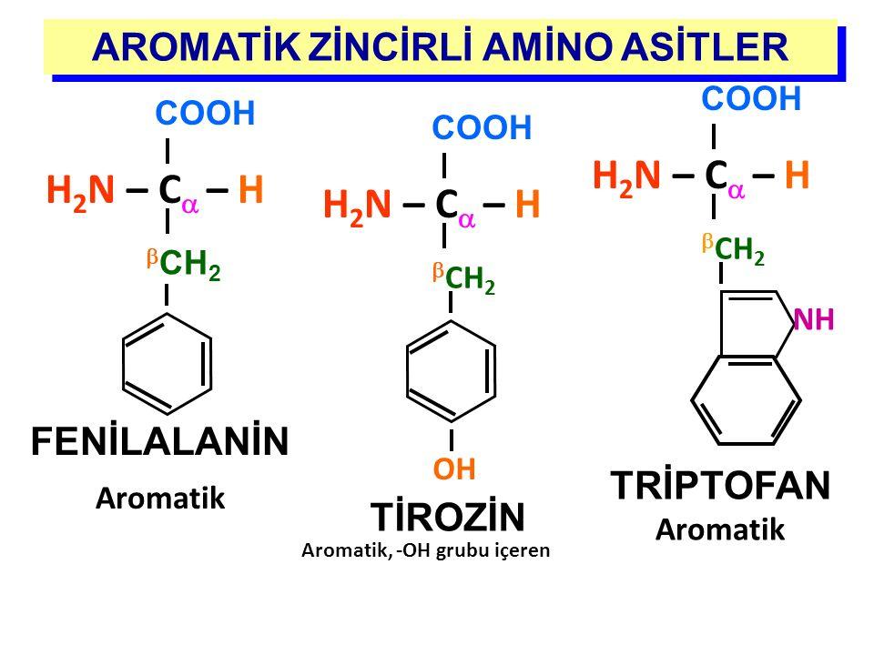 COOH H 2 N – C  – H  CH 2 FENİLALANİN Aromatik TİROZİN AROMATİK ZİNCİRLİ AMİNO ASİTLER COOH H 2 N – C  – H  CH 2 NH TRİPTOFAN Aromatik COOH H 2 N