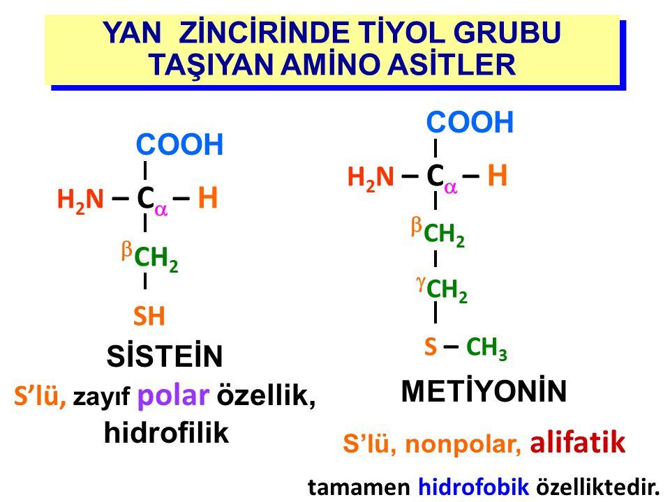 YAN ZİNCİRİNDE TİYOL GRUBU TAŞIYAN AMİNO ASİTLER SİSTEİN S'lü, zayıf polar özellik, hidrofilik H 2 N – C  – H COOH  CH 2 SH METİYONİN S'lü, nonpolar