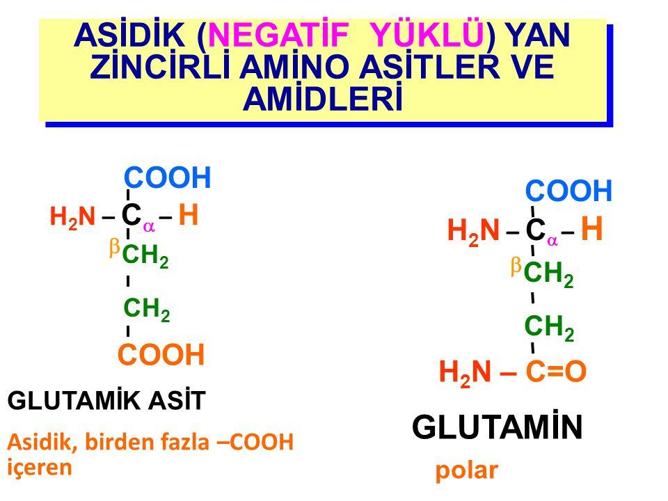 ASİDİK (NEGATİF YÜKLÜ) YAN ZİNCİRLİ AMİNO ASİTLER VE AMİDLERİ GLUTAMİN polar H 2 N – C  – H COOH  CH 2 CH 2 H 2 N – C=O GLUTAMİK ASİT Asidik, birden