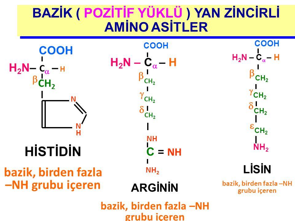 BAZİK ( POZİTİF YÜKLÜ ) YAN ZİNCİRLİ AMİNO ASİTLER  CH 2  CH 2  CH 2 NH C = NH H 2 N – C  – H COOH ARGİNİN bazik, birden fazla –NH grubu içeren H