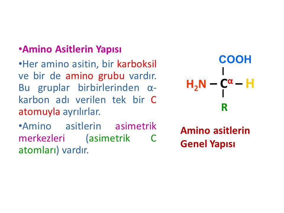 Amino Asitlerin Yapısı Her amino asitin, bir karboksil ve bir de amino grubu vardır. Bu gruplar birbirlerinden α- karbon adı verilen tek bir C atomuyl