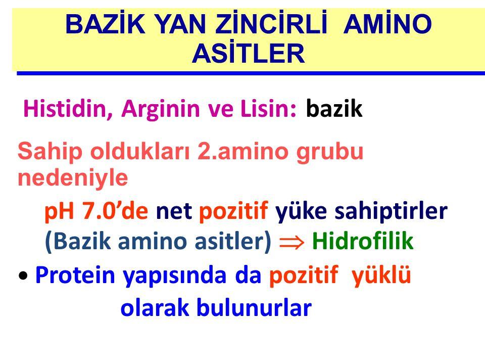 BAZİK YAN ZİNCİRLİ AMİNO ASİTLER Histidin, Arginin ve Lisin : bazik Sahip oldukları 2.amino grubu nedeniyle pH 7.0'de net pozitif yüke sahiptirler (Ba