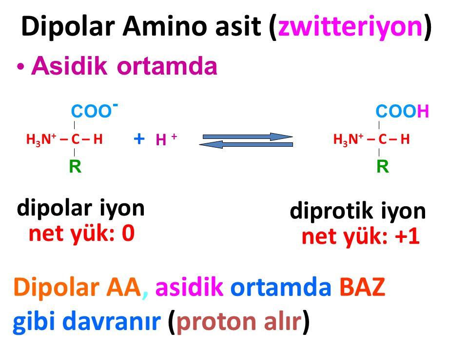 H 3 N + – C – H COOH R Dipolar Amino asit (zwitteriyon) Asidik ortamda + H + Dipolar AA, asidik ortamda BAZ gibi davranır (proton alır) H 3 N + – C –
