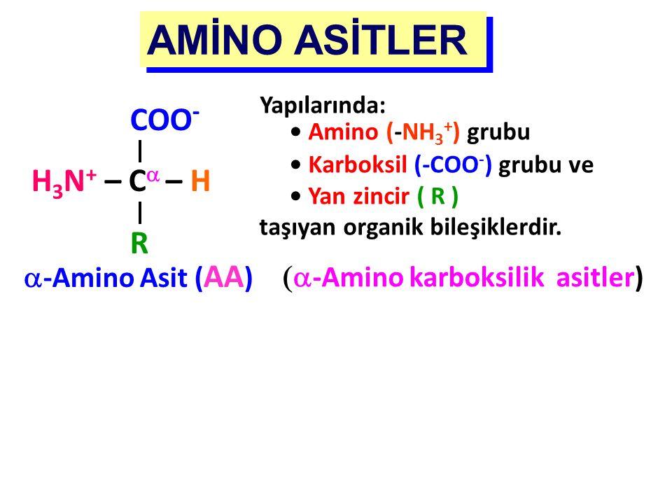 AMİNO ASİTLER  -Amino karboksilik asitler) COO - H 3 N + – C  – H R  -Amino Asit ( AA ) Yapılarında: Amino (-NH 3 + ) grubu Karboksil (-COO - ) gr