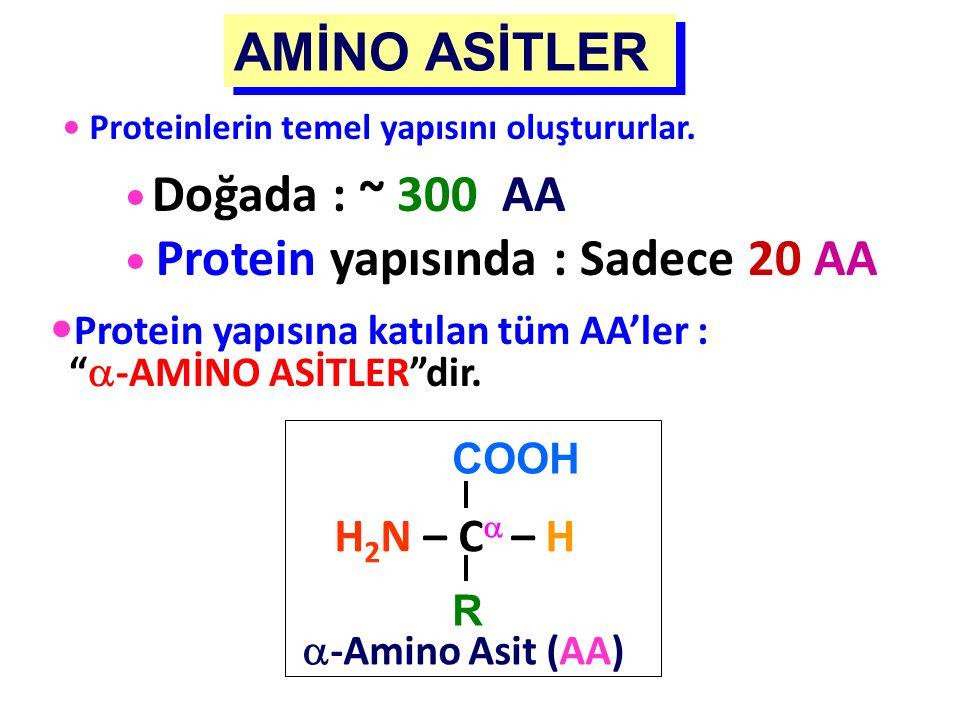 """COOH H 2 N – C  – H R  -Amino Asit (AA) Protein yapısına katılan tüm AA'ler : """"  -AMİNO ASİTLER""""dir. Proteinlerin temel yapısını oluştururlar. Doğa"""