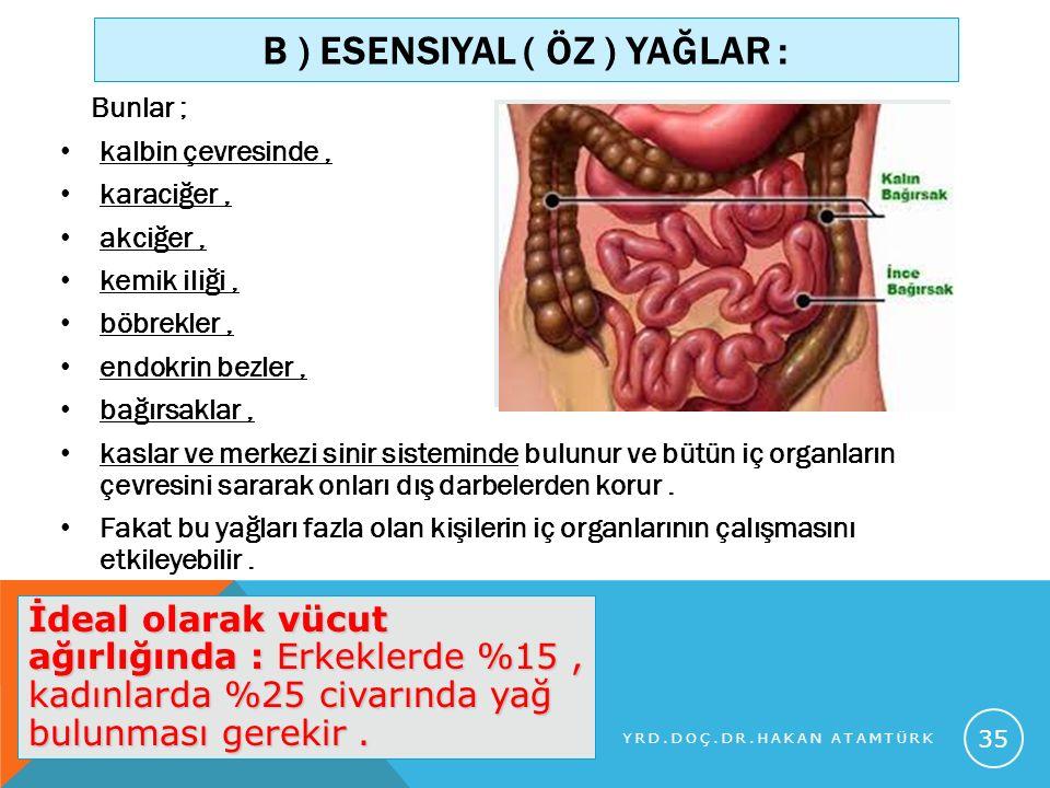 B ) ESENSIYAL ( ÖZ ) YAĞLAR : Bunlar ; kalbin çevresinde, karaciğer, akciğer, kemik iliği, böbrekler, endokrin bezler, bağırsaklar, kaslar ve merkezi