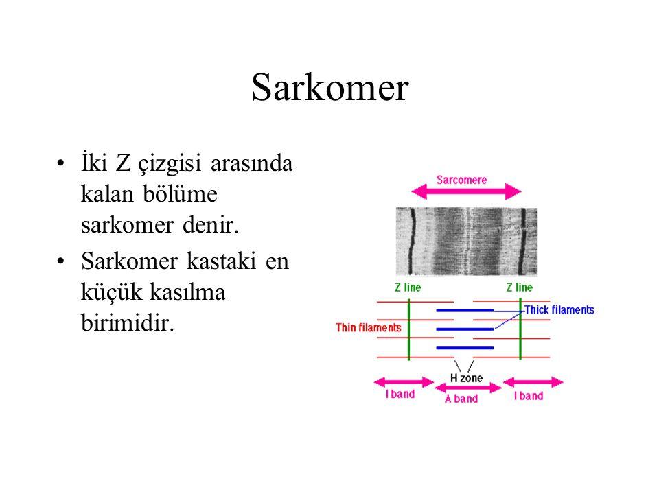 Sarkomer İki Z çizgisi arasında kalan bölüme sarkomer denir. Sarkomer kastaki en küçük kasılma birimidir.