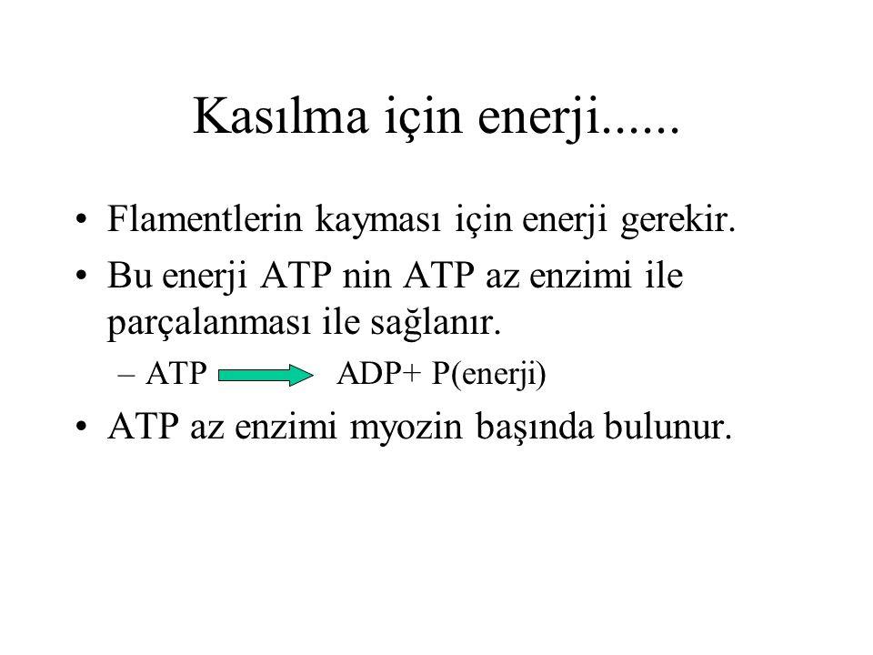 Kasılma için enerji...... Flamentlerin kayması için enerji gerekir. Bu enerji ATP nin ATP az enzimi ile parçalanması ile sağlanır. –ATPADP+ P(enerji)