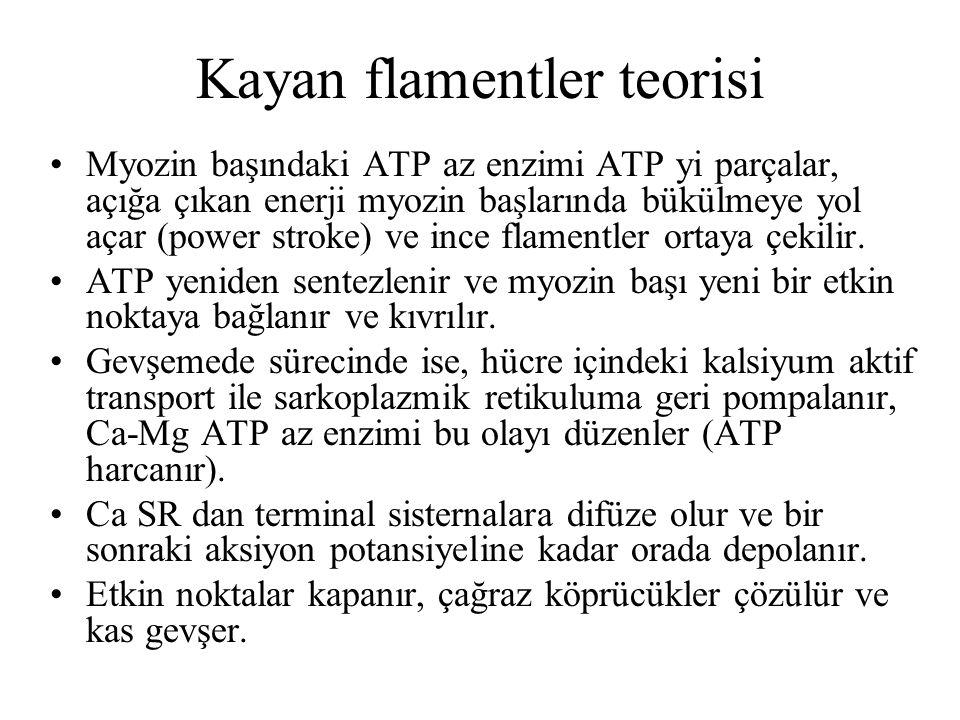 Myozin başındaki ATP az enzimi ATP yi parçalar, açığa çıkan enerji myozin başlarında bükülmeye yol açar (power stroke) ve ince flamentler ortaya çekil