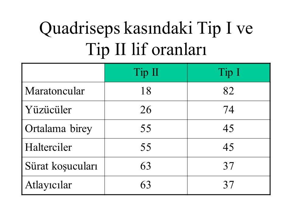 Quadriseps kasındaki Tip I ve Tip II lif oranları Tip IITip I Maratoncular1882 Yüzücüler2674 Ortalama birey5545 Halterciler5545 Sürat koşucuları6337 A