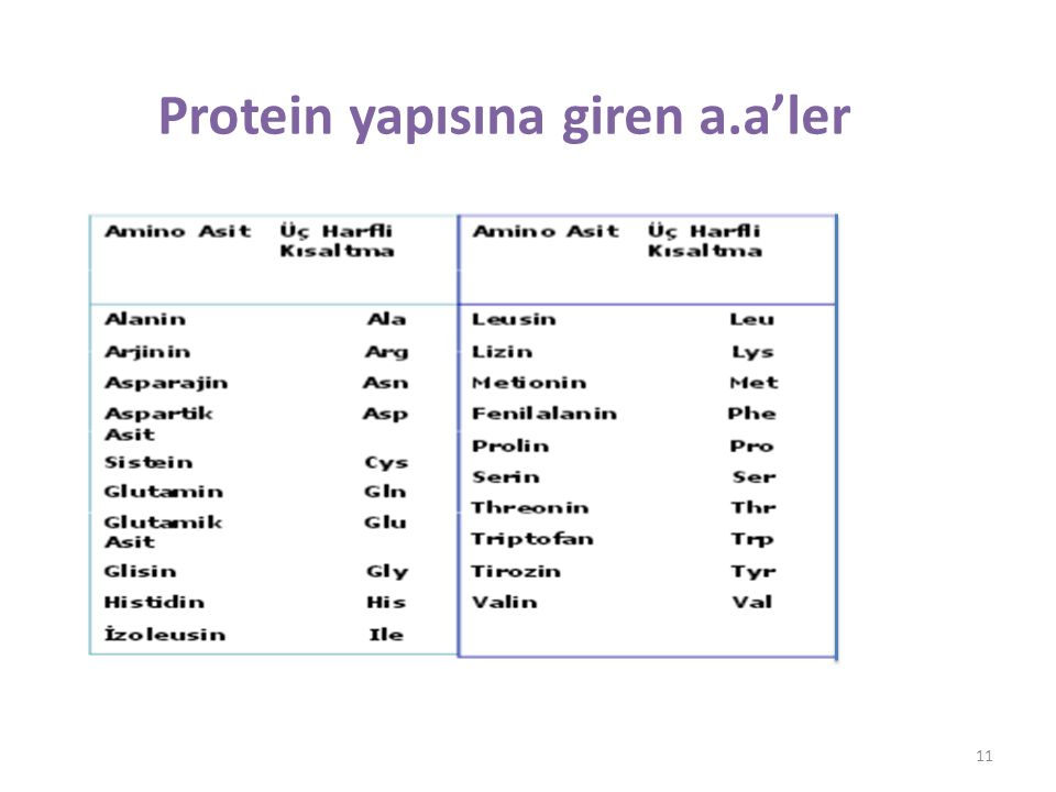 Protein yapısına giren a.a'ler 11