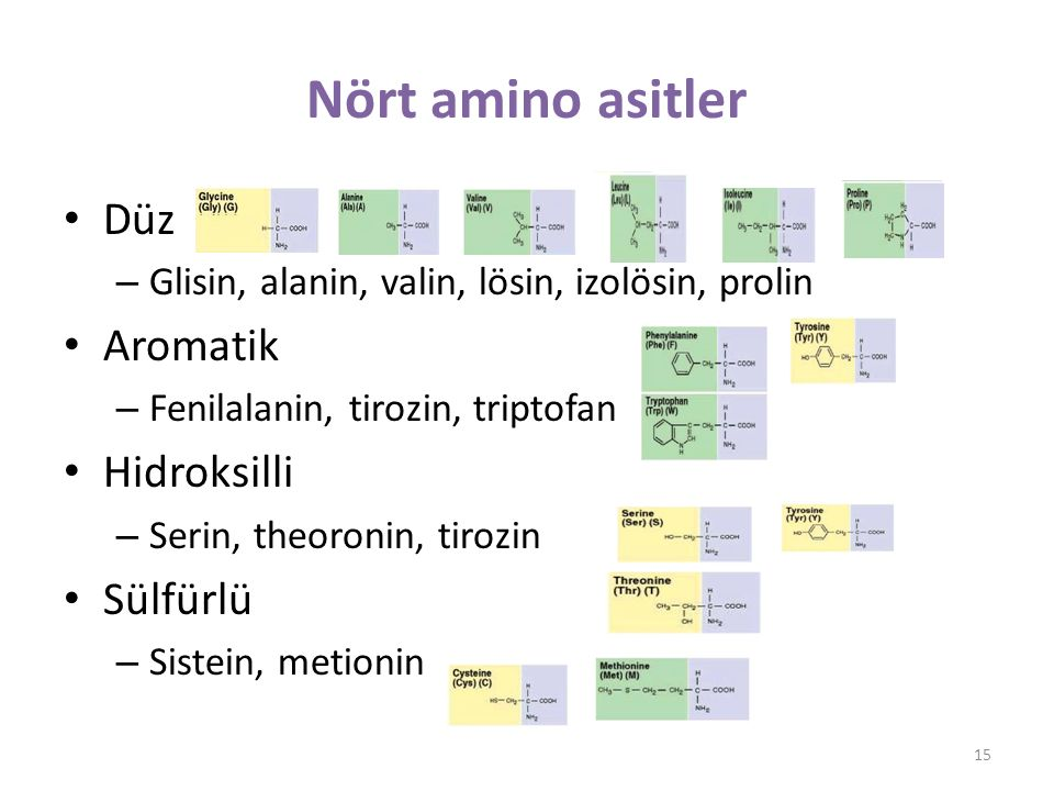 Nört amino asitler Düz – Glisin, alanin, valin, lösin, izolösin, prolin Aromatik – Fenilalanin, tirozin, triptofan Hidroksilli – Serin, theoronin, tirozin Sülfürlü – Sistein, metionin 15