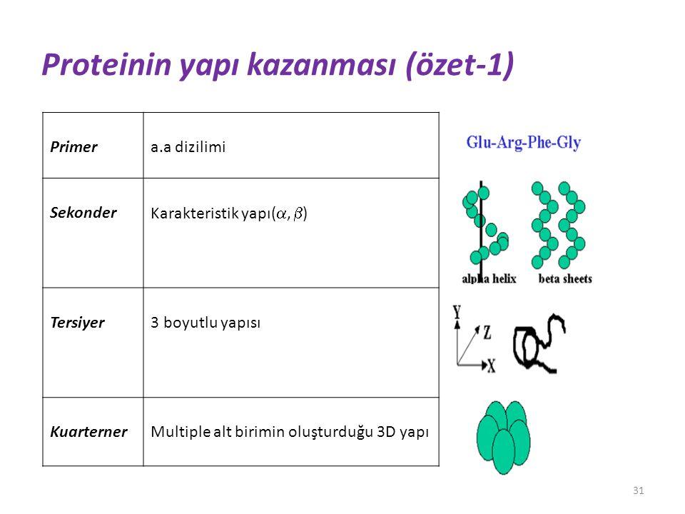 Proteinin yapı kazanması (özet-1) Primera.a dizilimi Sekonder Karakteristik yapı( ,  ) Tersiyer3 boyutlu yapısı KuarternerMultiple alt birimin oluşt