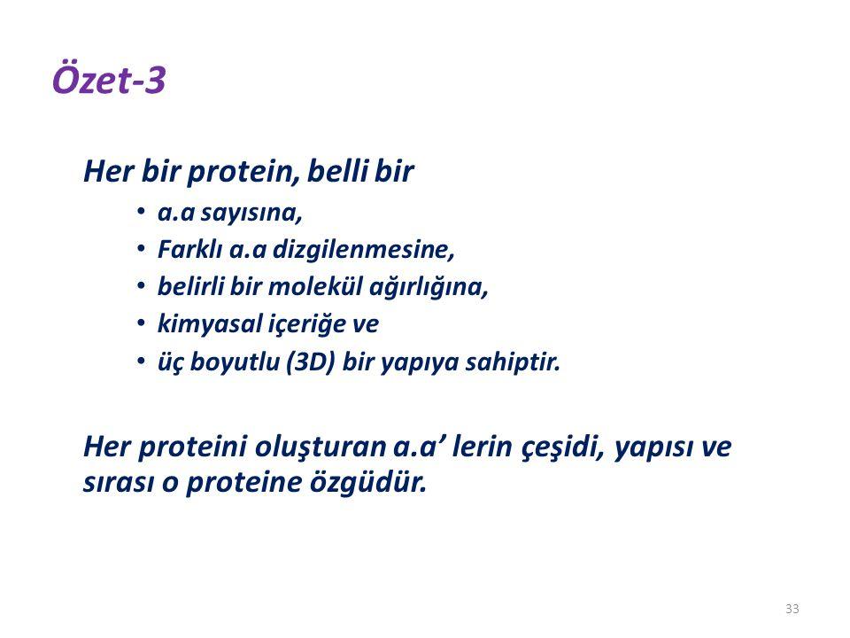 Özet-3 Her bir protein, belli bir a.a sayısına, Farklı a.a dizgilenmesine, belirli bir molekül ağırlığına, kimyasal içeriğe ve üç boyutlu (3D) bir yap